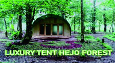 hejo forest