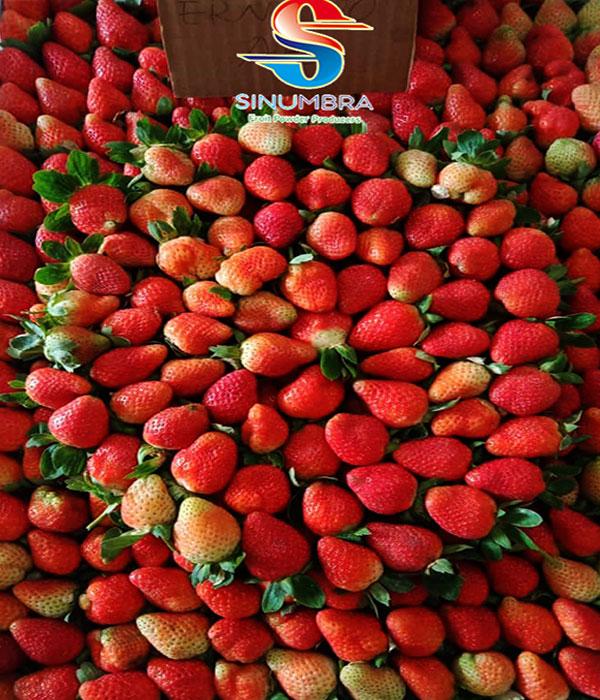 jual strawberry ciwidey